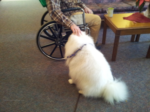 Pet Therapy Interaction