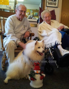 Holiday Pet Therapy