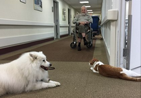 Niles & Schatzi Hanging Out in the Hallway